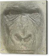 Primate Acrylic Print