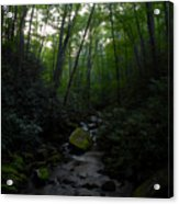 Primordial Forest Acrylic Print
