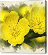 Primrose Flowers Blank Note Card Acrylic Print