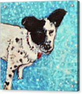 Primrose Water Love Acrylic Print