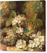Primroses And Bird's Nests On A Mossy Bank Acrylic Print
