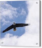 Prince Rupert Eagle Flight Acrylic Print