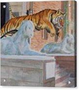 Princeton Tiger Acrylic Print