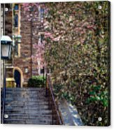 Princeton University Old Stairway Acrylic Print