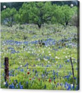 Private Property -wildflowers Of Texas. Acrylic Print