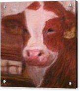 Prized Bull Acrylic Print by Richalyn Marquez