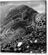 Profile Hawaiian Sea Turtle Bw Acrylic Print