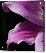 Profile In Pink Acrylic Print