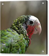 Profile Of A Conure Parrot Up Close Acrylic Print