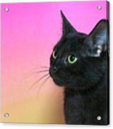 Profile Portrait Of A Black Kitten Acrylic Print