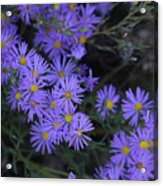 Profusion Of Purple Acrylic Print