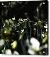 Promises Of Spring. Acrylic Print