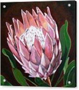Protea Acrylic Print