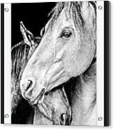 Protection In Black And White Acrylic Print