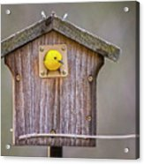 Prothonotary Warbler House Acrylic Print