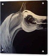 Proud Arabian Stallion Acrylic Print
