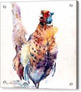 Proud Pheasant  Acrylic Print
