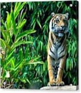 Proud Tiger Acrylic Print