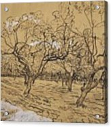 Provencal Orchard Arles  March - April 1888 Vincent Van Gogh 1853  1890 Acrylic Print