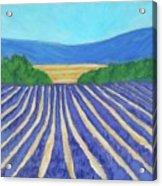 Provence Lavender Field Acrylic Print