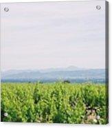 Provence Spring Vineyard Acrylic Print
