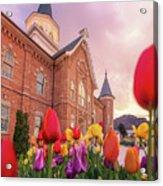 Provo City Center Temple Tulips Acrylic Print