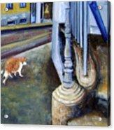 Prowling Cat Acrylic Print