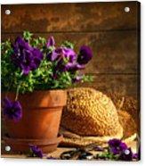 Pruning Purple Pansies Acrylic Print by Sandra Cunningham