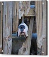 Psst Help Me Outta Here Acrylic Print by DigiArt Diaries by Vicky B Fuller