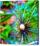 Psychedelic Dandelion Acrylic Print