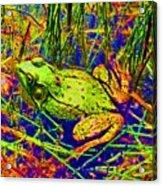 Psychedelic Frog  Acrylic Print