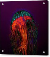 Psychedelic Jellyfish Acrylic Print