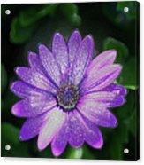 Psychedelic Purple Petals  Acrylic Print