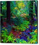 Psychedelicosmic Creek On Mt Tamalpais Acrylic Print