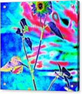 Psycho Daisy Acrylic Print