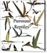 Pterosaur Reptiles Acrylic Print