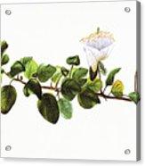 Puapilo Plant Acrylic Print