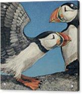 Puffin Palooza Acrylic Print