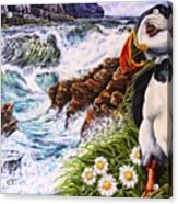 Puffin Peace Acrylic Print