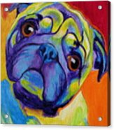 Pug - Lyle Acrylic Print by Alicia VanNoy Call