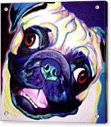 Pug - Rider Acrylic Print
