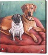 Pug And Rhodesian Ridgeback Acrylic Print