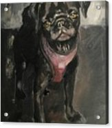 Pug Days Acrylic Print