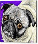 Olivia The Pug Acrylic Print