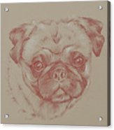 Pug Square Acrylic Print