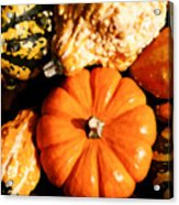 Pumkin And Gourds Acrylic Print