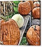 Pumkins In A Row Acrylic Print
