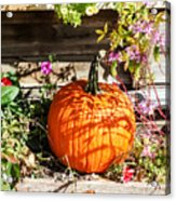 Pumpkin And Flowers Acrylic Print