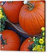 Pumpkin And Flowers Acrylic Print