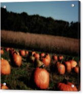 Pumpkin Field Shadows Acrylic Print
